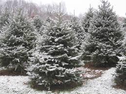 dutchess county christmas tree farms