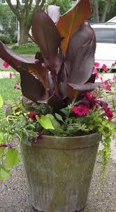 annuals u2013 mel u0027s green garden