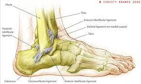Foot Ligament Anatomy Dry Docked U2013 Three Steps To Avoiding Ankle Injuries Zigzag Magazine