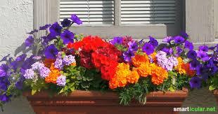 balkon blumen essbare blüten für balkon und terrasse