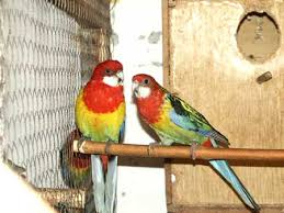Pet shop ,,Zoo Amazona'' Images?q=tbn:ANd9GcStHIiILrxzsVx5lzJb0mnub3lthUTnzxAVEKjHAR3vhclhu1Q6