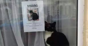 Missing Cat Meme - missing cat found near his own missing cat poster bored panda