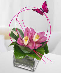 tulsa florists marlo the gift for the who orchids tulsa