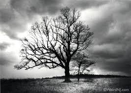 the s tree nj