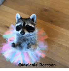 Racoon Meme - melanie raccoon meme on me me