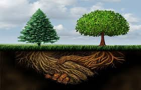 a tree a business what is in common ed mayer marketing