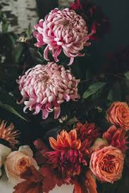 275 best flowers plants and gardening images on pinterest city