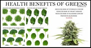 Legalize Weed Meme - health benefits greens cannabis plant legalize weed memes