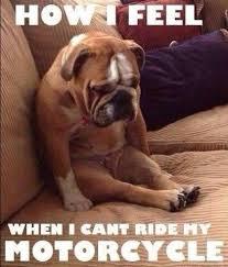 Motorcycle Meme - top 10 funny biker memes devitt insurance
