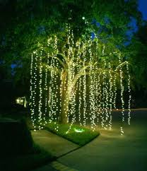 mini lights willow tree string lights and backyard
