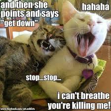 Cat Sitting Meme - pet sitting by mitzie home facebook