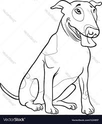 bull terrier dog for coloring book royalty free vector image