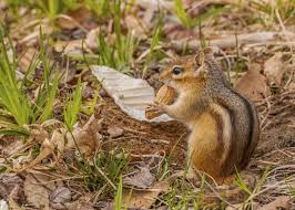 Snake Holes In Backyard How To Fill In Chipmunk Holes Hunker