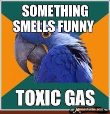 Parrot Meme - paranoid parrot meme funny cute pinterest meme humor and