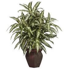 Indoor Plant Vases Indoor Plants You U0027ll Love Wayfair