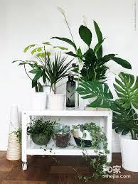 floor plants home decor 室内花园 入户花园装修设计效果图 plant and garden pinterest plants