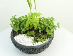Diy Herb Garden Diy Herb Garden Idea Grow A Herbal Tea Garden In A Large Pot At Home
