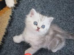 haz gold fishy kitten photography