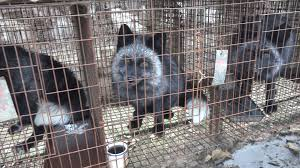 fur cruelty not in our backyard so why on our shop shelves why