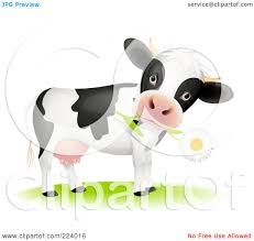 cow daisy clipart explore pictures