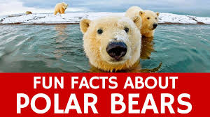 Truth Bear Meme - interesting facts about polar bears educational video for kids and