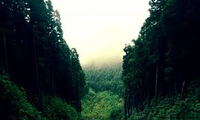 wallpaper tumblr forest mountain forest tumblr wallpapers background
