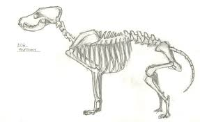 dog skeleton sketch advanced animation skills research