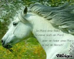 pferde spr che ein pferde spruch bild 117995456 blingee