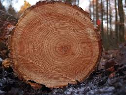 tree rings images images Tree rings reveal our past and our future mnn mother nature jpg