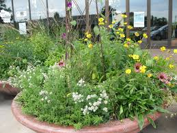 native plants container gardening with native plants