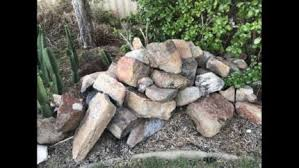 coffee rocks various sizes other garden gumtree australia