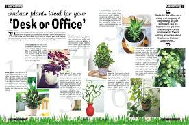 small low light plants ergonomic best small indoor office plants easy to grow houseplants