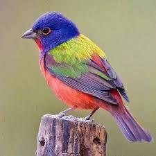 South Carolina birds images 14 best the birds nest images backyard birds jpg