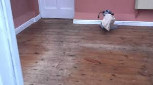 floor sanding in chester pitch pine floorboards sanded and