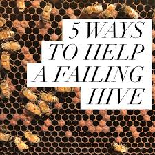 beekeeping like a 5 ways to help a failing hive