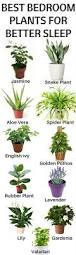 Best Plants For Bedroom Best Plants To Keep In Your Bedroom To Help You Sleep Home Gardeners