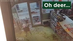 deer 6abc com