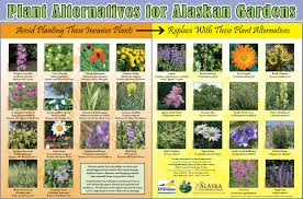 native alternatives to invasive plants kenai peninsula cooperative weed management area