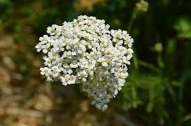 20 drought tolerant plants for your zone 3 garden joybilee farm