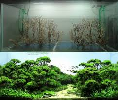 Aquascape Shop Best 25 Aquarium Aquascape Ideas On Pinterest Aquarium Ideas