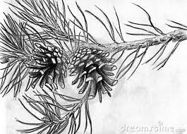 Cone Tree Pine Cones Drawing Google Search China Painting Trees Leaves