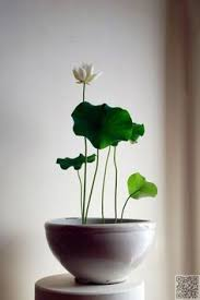 Indoor Plants That Don T Need Sun 12 Best Plants That Can Grow Indoors Without Sunlight Sunlight