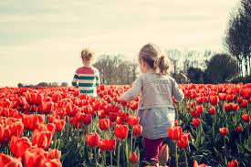 free stock photos of spring flowers pexels