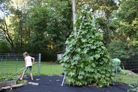 how to make a trellis for cucumbers how to make a tripod garden trellis from pvc pipe how tos diy