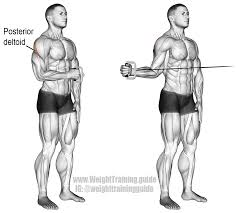 cable external shoulder rotation this is a very important