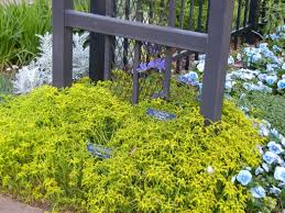 Flower Shrubs For Shaded Areas - plants for east texas east texas gardening