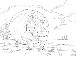 hippo at dawn coloring page free printable coloring pages