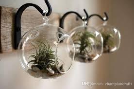 orb terrarium garden planters hanging glass succulent terrarium