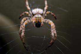 jumping spider anatomy gallery learn human anatomy image