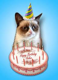 Meme Generator Grumpy Cat - grumpy cat birthday card funny faxo